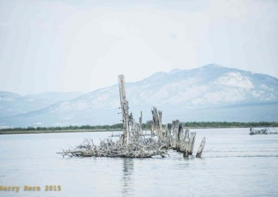 yukon-river-quest-whitehorse-dawson-yukon-8738